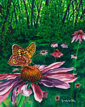 """Great Star Spangled Fritillary"""