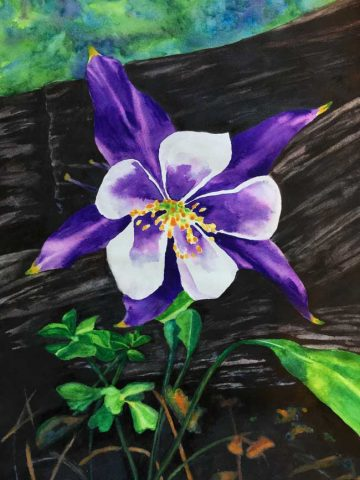"""Columbine On Forest Floor"""